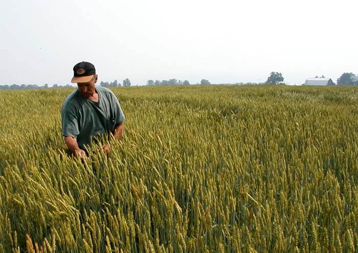 Ukraine planted winter grains throughout over 6.9 mln ha – Ministry of Agrarian Policy