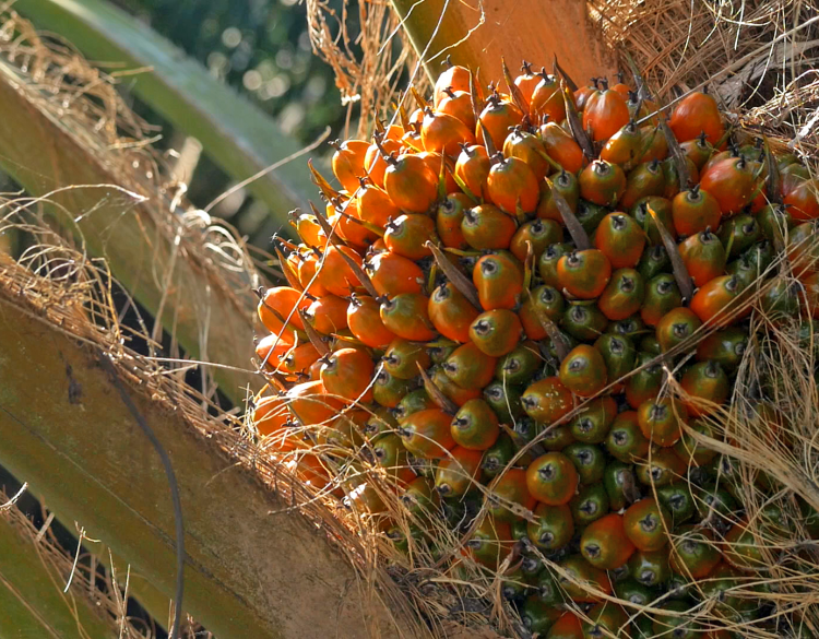 Asian palm oil to get a boost in 2020 on lower output, biofuel mandates- 07.01.2020