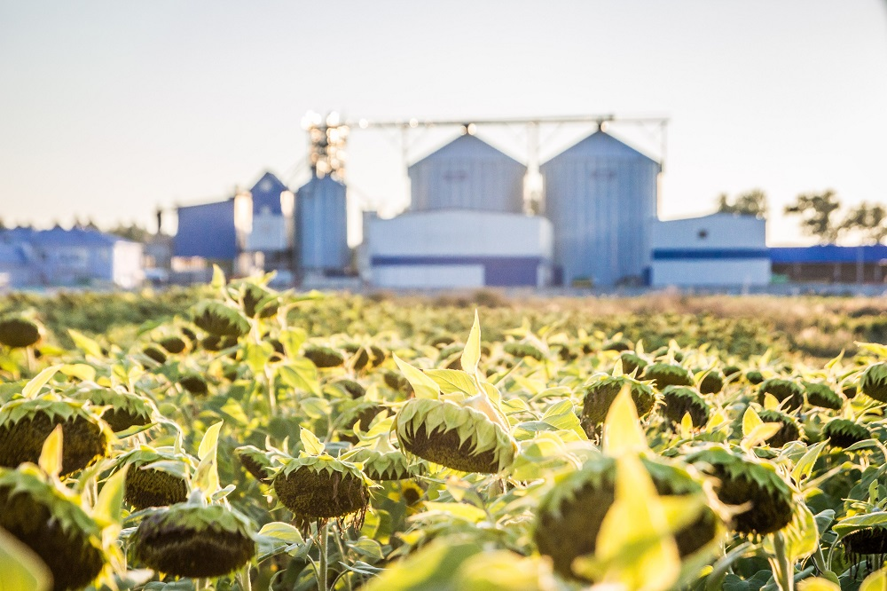 Kernel oilseeds processing scaled up 16 pct - 22.01.2020