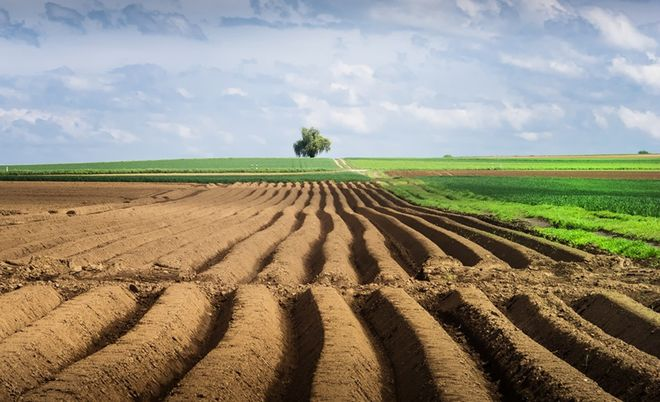 Experts estimated potential farmland price in Ukraine - 05.02.2020