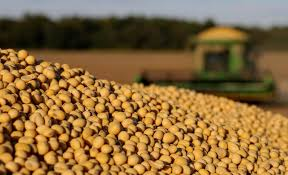 APK-Inform increased the forecast of Ukrainian soybean exports - 12.03.2020