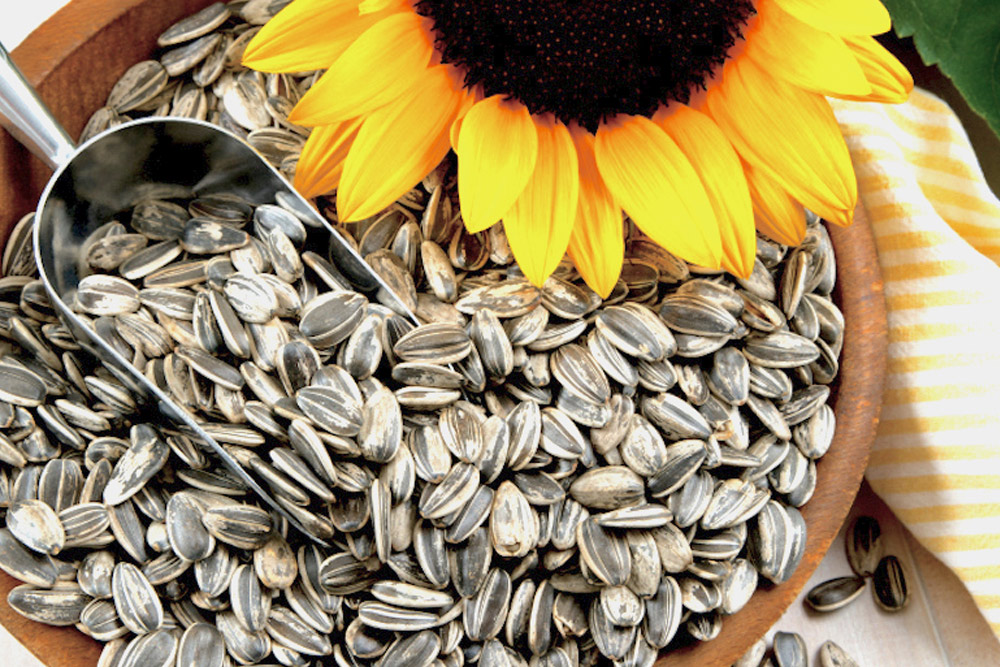 Ukraine: Verkhovna Rada withdrew the draft law on cancellation of the export duties on sunflower seed