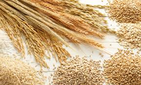 Ukraine exported almost 25 mln tonnes of grains - 02.12.2019