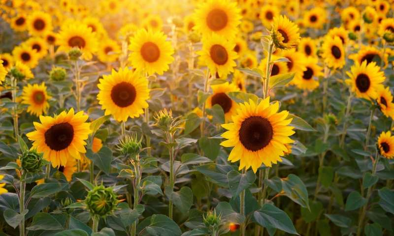 India dominates Ukrainian sunflower oil exports in Jan-Nov - 09.12.2019