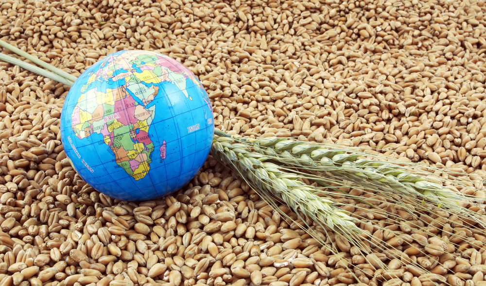 Asian wheat to face headwinds amid uncertain trade flows, erratic weather - 30.12.2019
